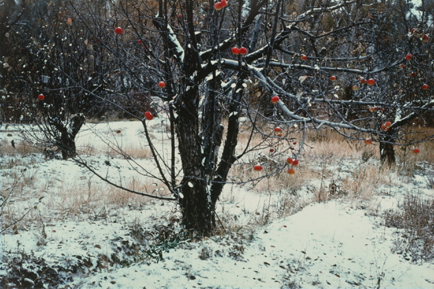 """Apple Orchard, Tesuque, N.M.,"" 1981, dye coupler print by Paul Caponigro."