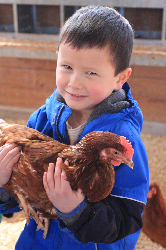 Chatty Chickens is our family program focused on all things chicken. Come learn what's involved in raising chickens and collect eggs while visiting with our organically raised flock of Golden Comet hens.