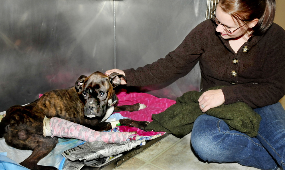 Christine Pierce of North Anson found Dempsey in an abandoned warehouse nine days after he had been hit by a car.