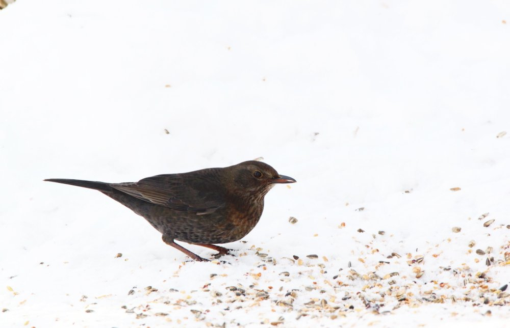 Birds will eat bread and seeds tossed on the ground or put in a flat dish, if you'd rather not go the feeder route.