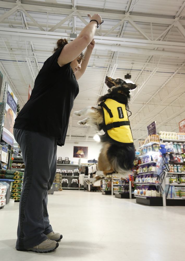 Zion, an Australian shepherd training to become a medical alert and psychiatric service dog, jumps for owner Samantha Boudrot of Old Orchard Beach during a class at Pet Quarters in Scarborough.