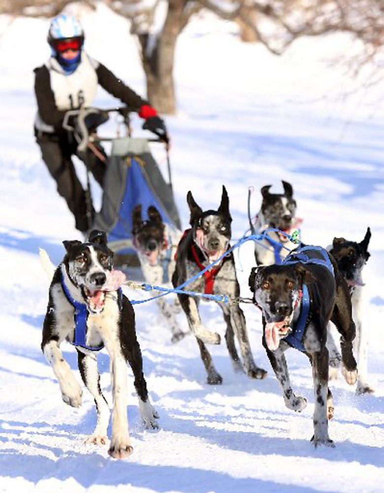 The annual Mushers Bowl Winter Carnival, featuring dog-racing competitors from throughout the northeastern United States and Canada, takes place Saturday and Sunday at Five Fields Farm in Bridgton.