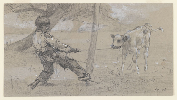 """Study for """"The Unruly Calf"""" by Winslow Homer, circa 1875."""