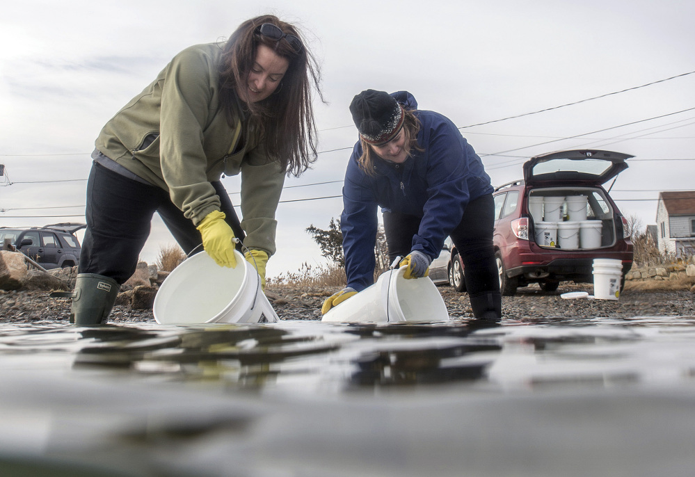 Alison Darnell, left, and Heather Ahearn, founders of Atlantic Saltworks, gather five-gallon buckets of salt water at a secret place on the coast of Cape Ann, Mass., on Monday. Their salt is winning attention from foodies.