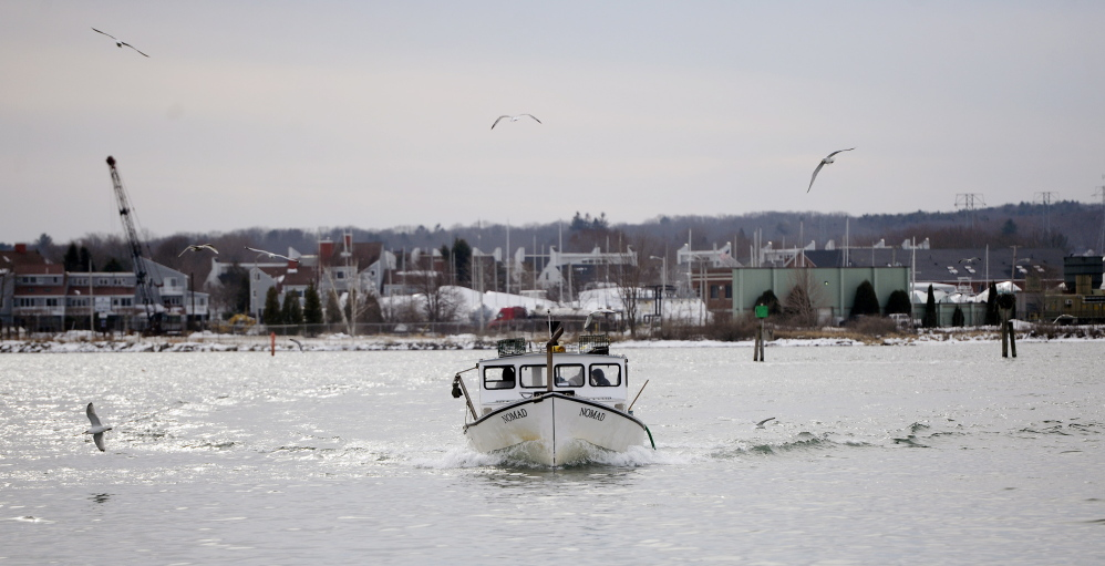 The boat Nomad was out in Portland Harbor on Friday, checking traps in preparation for the dredge.