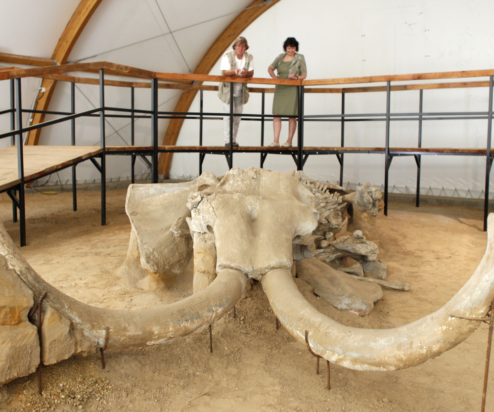 Women view a skeleton of a mammoth in Kostolac, Serbia. As more fossilized mammoths are exposed, the legal trade in mammoth tusks increases. Traders and conservationists are split on how this will affect elephants, which are slain for their ivory tusks.