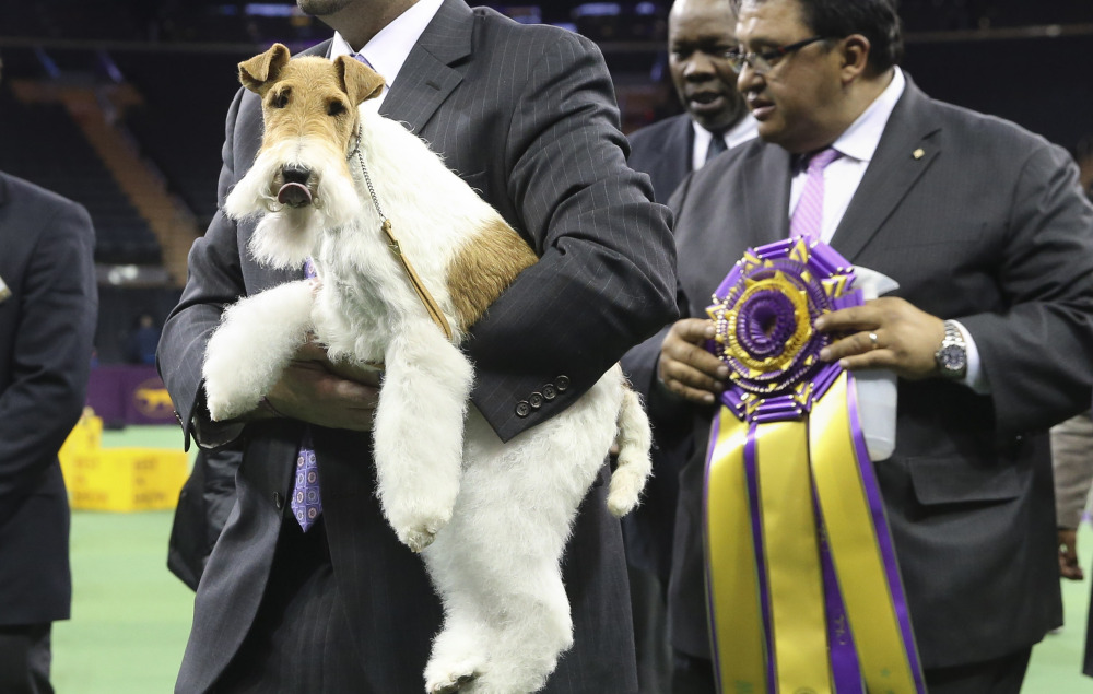 Sky, a wire fox terrier, is carried from the competition ring after winning best in show at the Westminster Kennel Club dog show on Tuesday in New York.