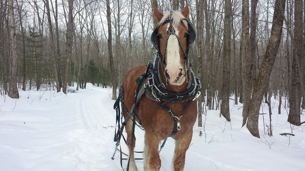 The Abenaki Draft Horse Association holds its Winterfest in Lyman on Sunday, featuring horse-drawn sleigh rides, sledding, food and drink, and blacksmith demonstrations.