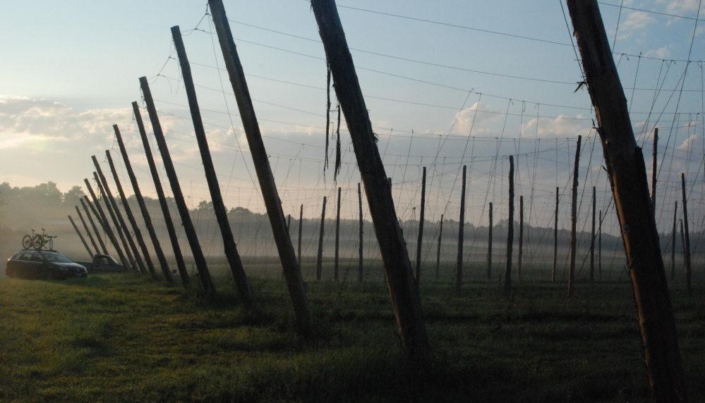 The Hop Yard has expanded its farming operations to Gorham, where trellises are staked out for this year's crop of hops.