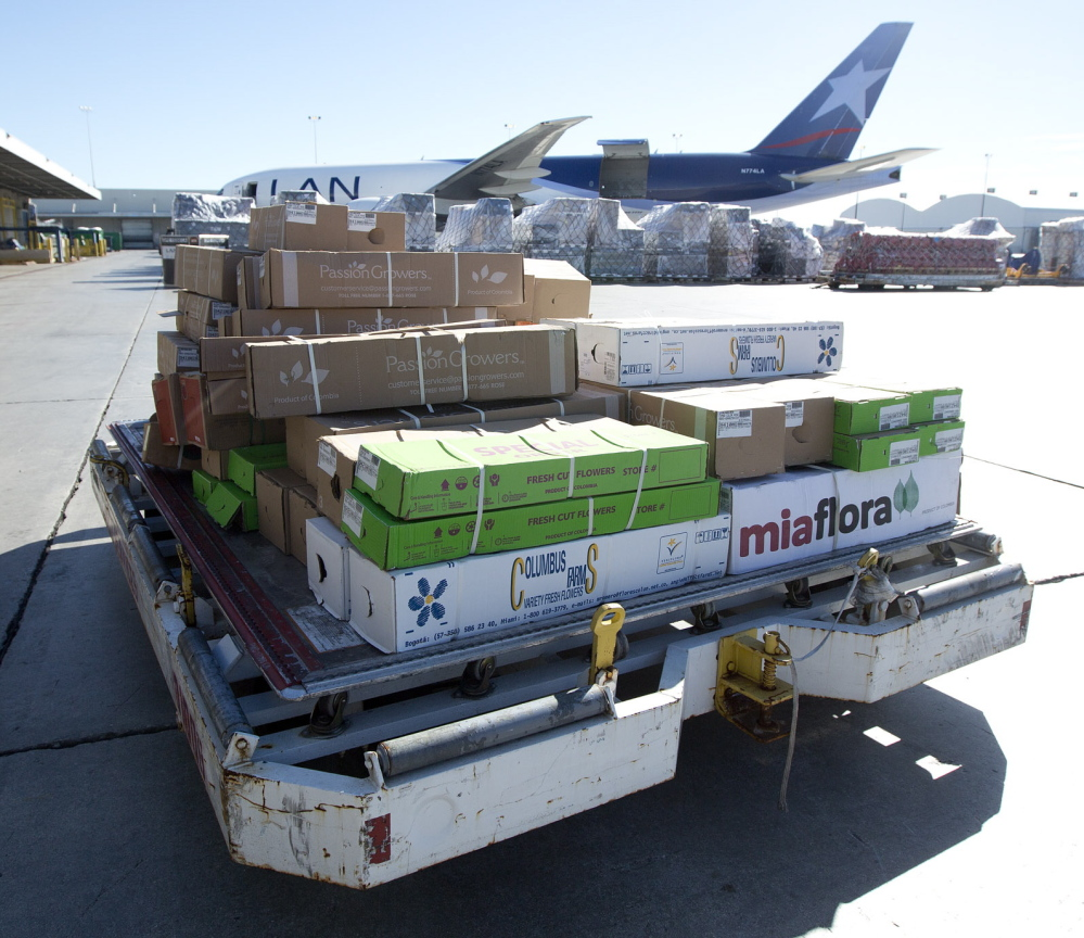 At Miami International Airport, a load of flowers is rushed from a plane to a chilled warehouse where big vacuums suck hot air out of boxes and bring in the surrounding cold air for freshness.
