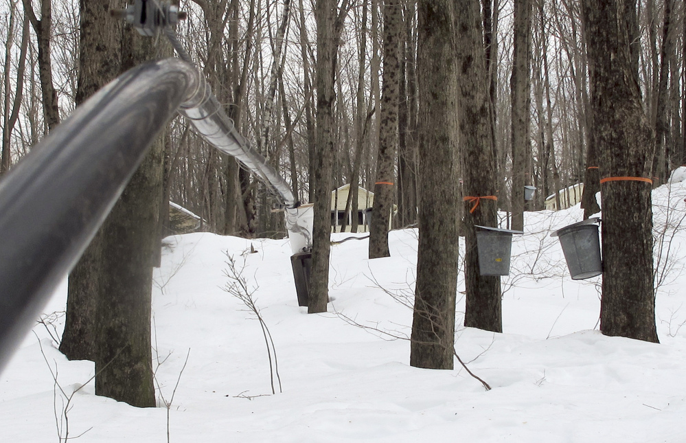 Maple syrup maker Ron Wenzel didn't start tapping his trees until this past weekend, when temperatures in the 40s and 50s finally allowed the sap to flow.