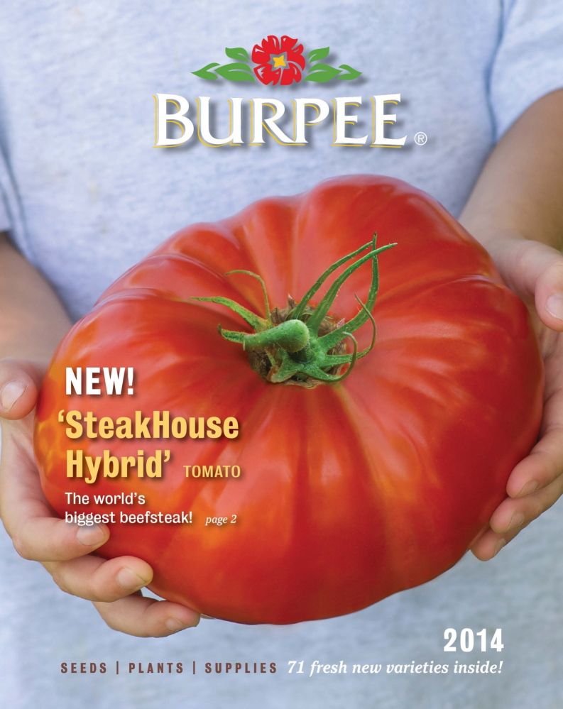 Burpee's new Steakhouse, pictured on its catalog cover, is the largest beefsteak tomato ever bred, tipping the scales at up to 3 pounds, according to the company.