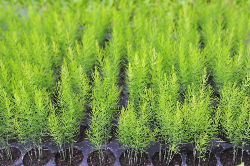 Flex that green thumb: Come May, plant sales will be sprouting everywhere.