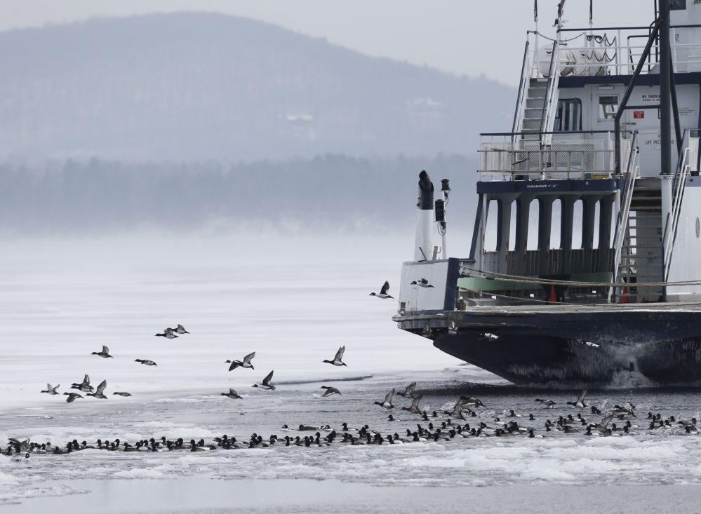 Ducks take flight as the Essex-Charlotte ferry nears its dock in Essex, N.Y., on Wednesday. Thousands of birds that normally scatter across the 120-mile lake are drawn to the ferry channels.
