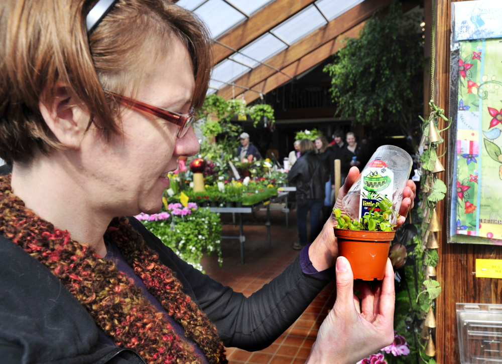 Erica Giddinge of Pownal inspects a Venus flytrap on Saturday while visiting Skillins Greenhouses in Falmouth with her daughter Taisey, 8. Spring officially arrives Thursday.