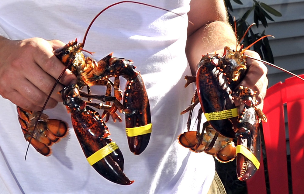 ANGLING FOR FUNDING: A research proposal from Maine chosen to compete for NASA funding aims to predict the movements of key species in the Gulf of Maine, including lobster.