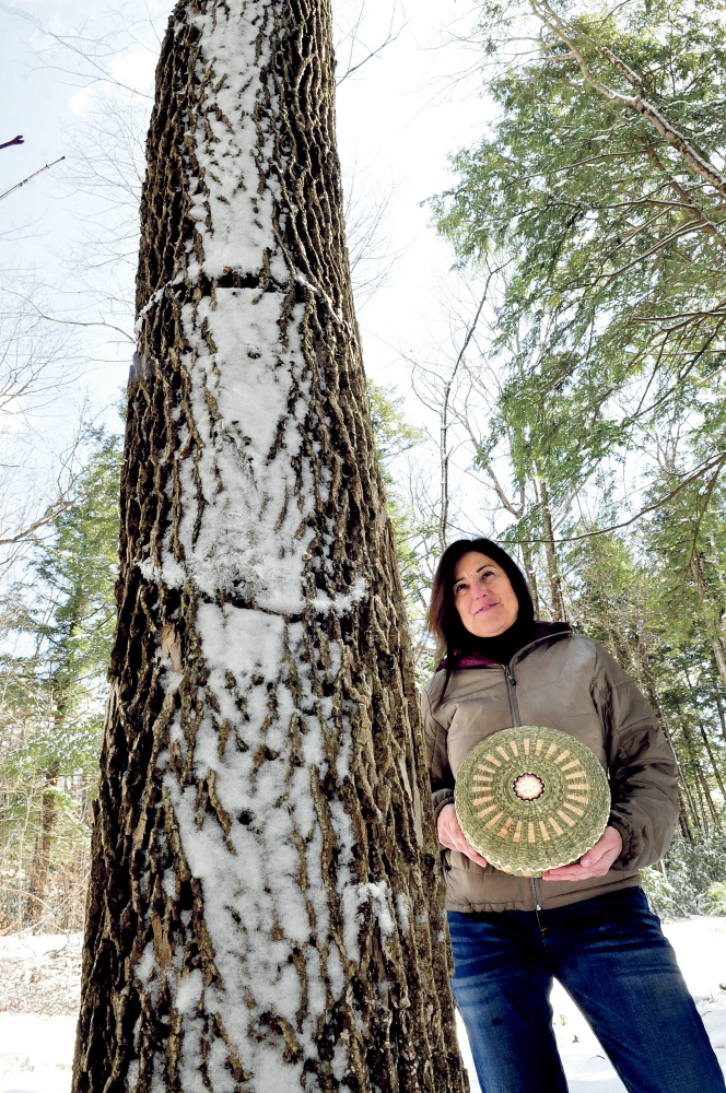 """Theresa Secord, president of the Maine Indian Basketmakers Alliance, stands beside an ash tree in Waterville, while holding a basket she made. She is raising concern that the emerald ash borer might devastate ash trees in the state. """"These invasive pests are nearly unstoppable,"""" she said."""