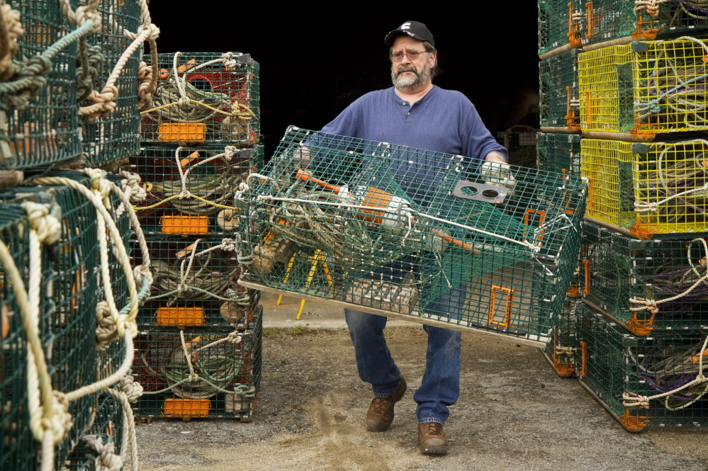 "Lobsterman Wayne Parry gets some of his 800 traps ready for the season at his Arundel workshop on Wednesday. ""A little less catch should help us a little on price,"" said Parry. ""It's hard to tell how a huge reduction in catch would affect us."""