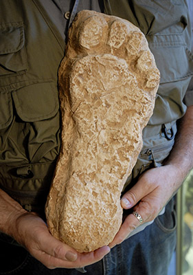 Loren Coleman holds a model of Bigfoot at the International Cryptozoology Museum in Portland. The supposed Bigfoot footprint was found in Washington state in the 1980s.