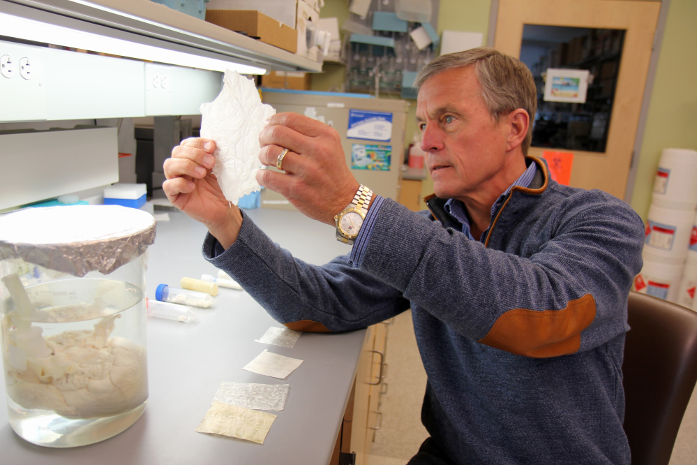 Dr. Stephen Badylak, at the University of Pittsburgh Medical Center, holds material used in his muscle regeneration study.