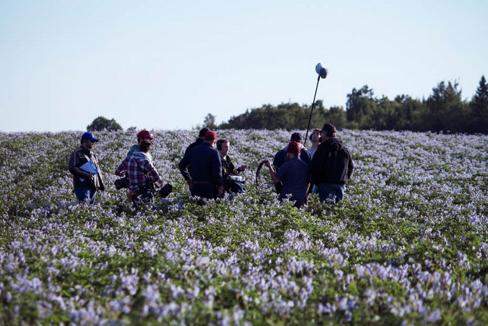 Filmmakers work in a sea of blue potato plants on the LaJoie land.