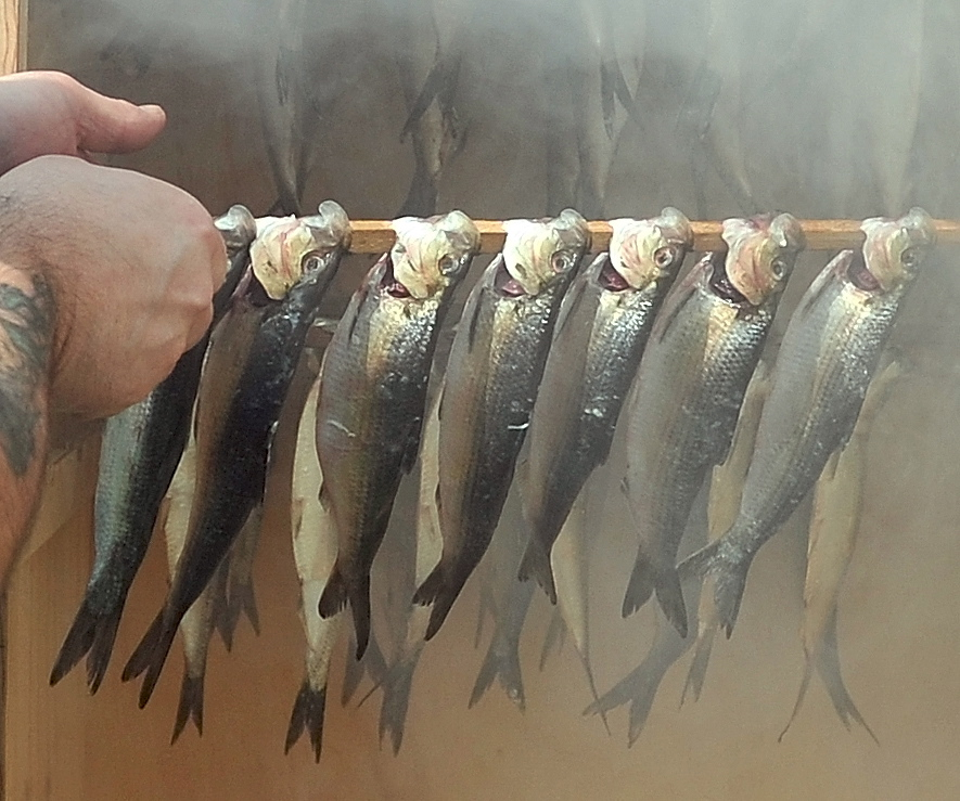 Rob Hebert places a rack of Alewives into his white oak chip smoker at his home in Benton. Contrary to popular belief, the wood chips do not play a role in the flavor of the meat.