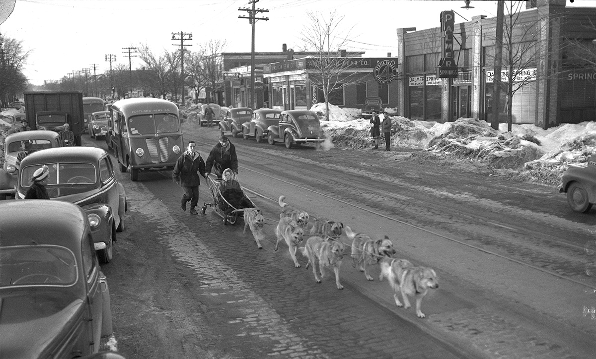 Flashback Dogsledding Down Forest Avenue In 1947