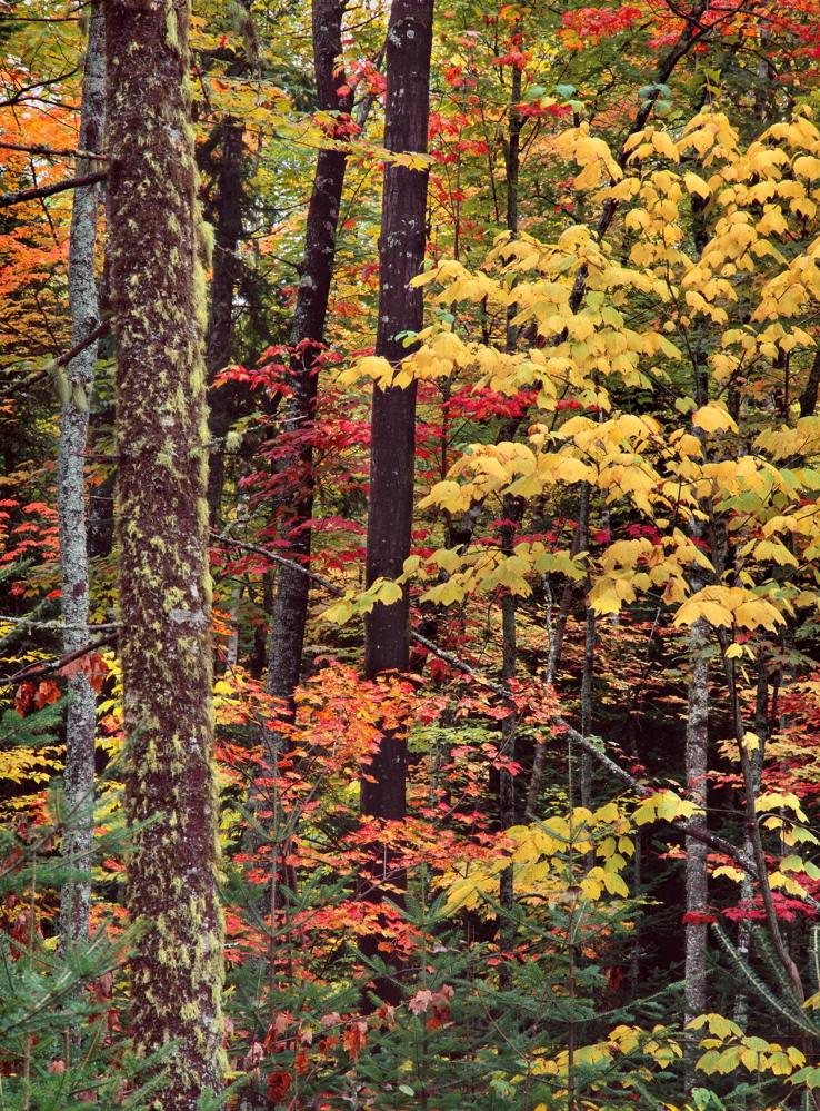 Autumn in all its glory makes a rural walk almost mandatory for any spiritual descendant of Thoreau.