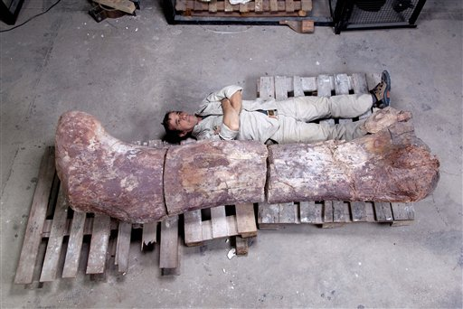 The head of Museo Paletontologico's technical laboratory, Pablo Puerta, lies alongside a sauropod dinosaur femur, believed to be the largest in the world.