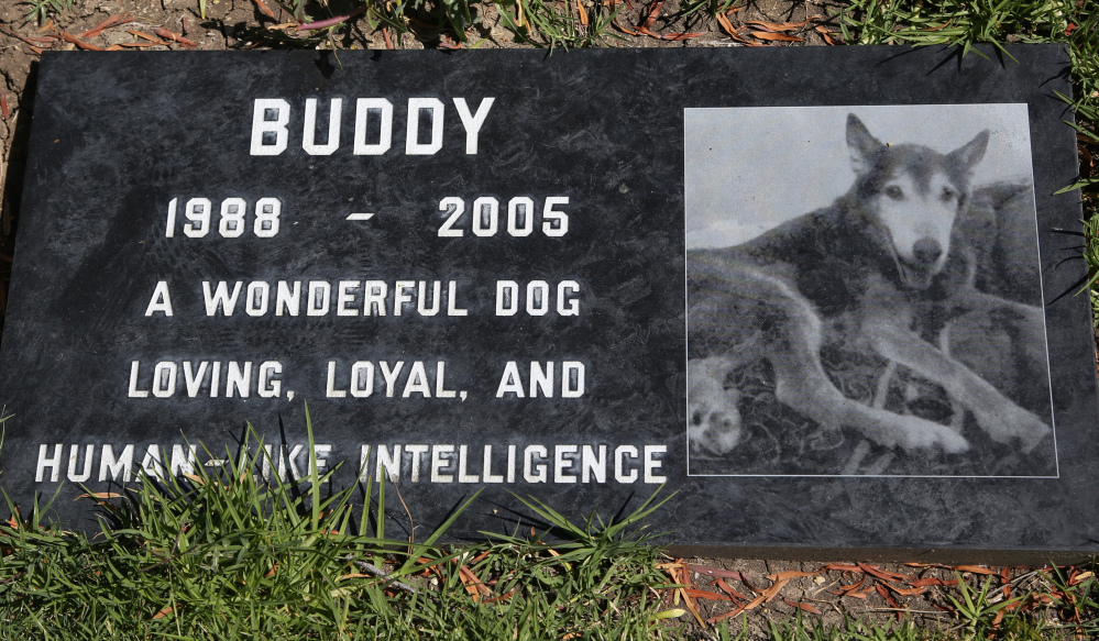A stone marks the grave of Buddy, a family pet memorialized at the Los Angeles Pet Cemetery in Calabasas, Calif. The Associated Press
