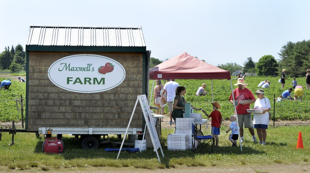 Maxwell's Farm in Cape Elizabeth in 2013, one of several local pick-your-own farms now open for the fleeting Maine strawberry season.