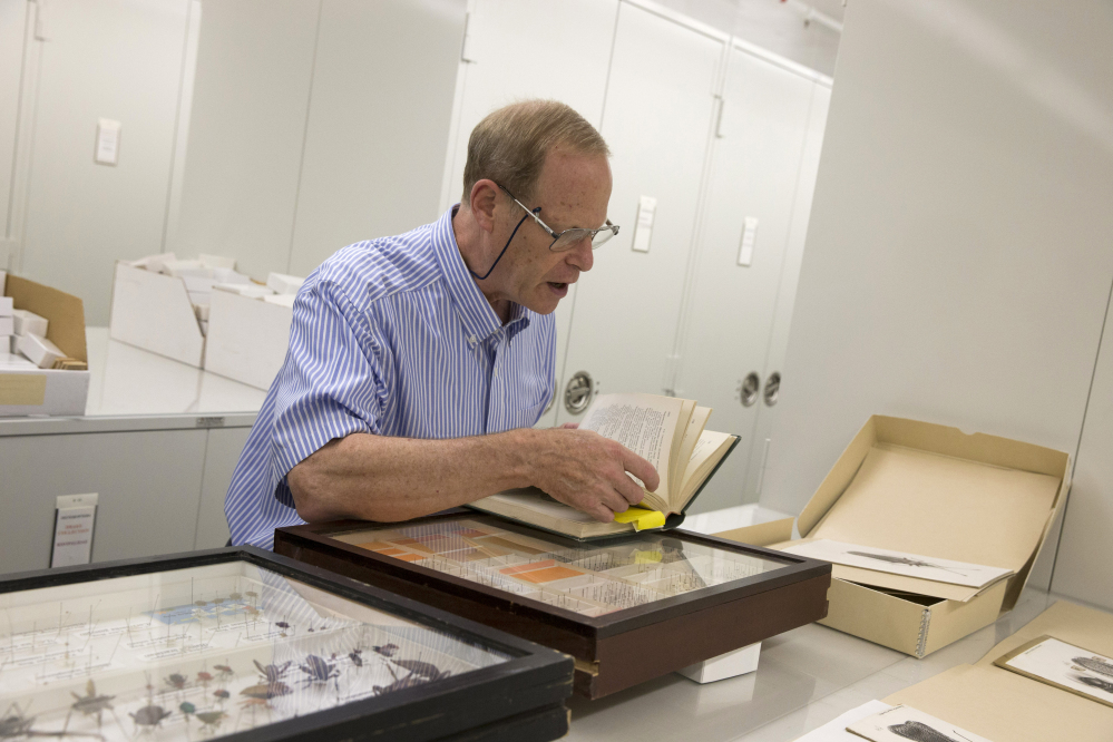 Dr. David Furth examines the Smithsonian Natural History museum's Drake insect collection in Washington.