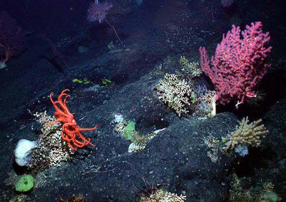 This photo of gorgonian soft coral, a brisingid sea star and sponges was taken along the New England Seamounts chain off the Northeast coast.