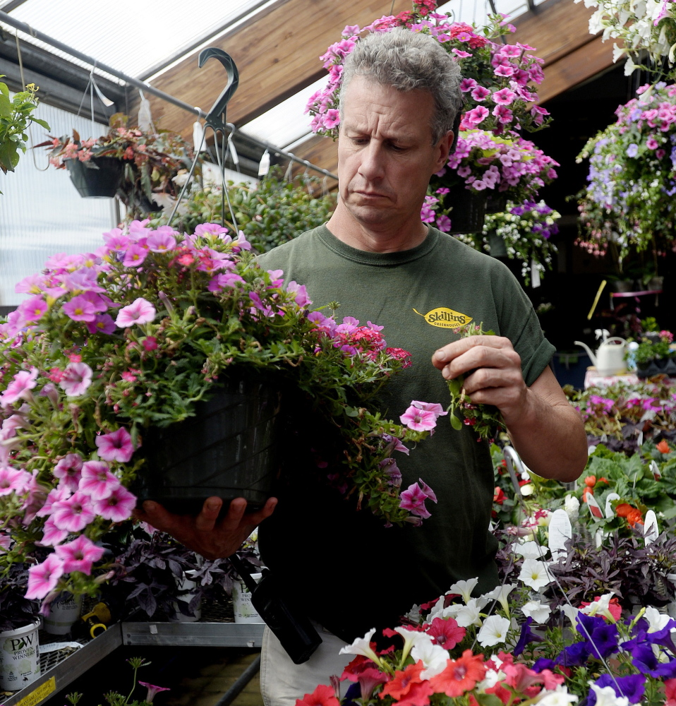 Mike Skillin at Skillin's Greenhouses in Falmouth said that none of the company's three Maine locations uses neonicotinoid pesticides.