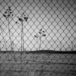 A pinhole camera captures vegetation growing from a basketball court at the Passamaquoddy's Pleasant Point reservation in Washington County. Forty years ago, the tribe's attorney, Don Gellers, faced an uphill fight as he tried to appeal his drug conviction.