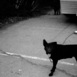 A pinhole camera captures a dog chained to a trailer on Passamaquoddy tribal land recently. For many people on the reservations, the way that leaders managed the tribe's newfound wealth after the land claims settlement of 1980 left a legacy of disenchantment.