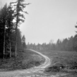 An area off Peter Dana Point Road in Indian Township has been freshly logged in this pinhole camera photo. How the Passamaquoddy have managed forestlands in the past decade has led to a significant rift between the tribe's two reservations.
