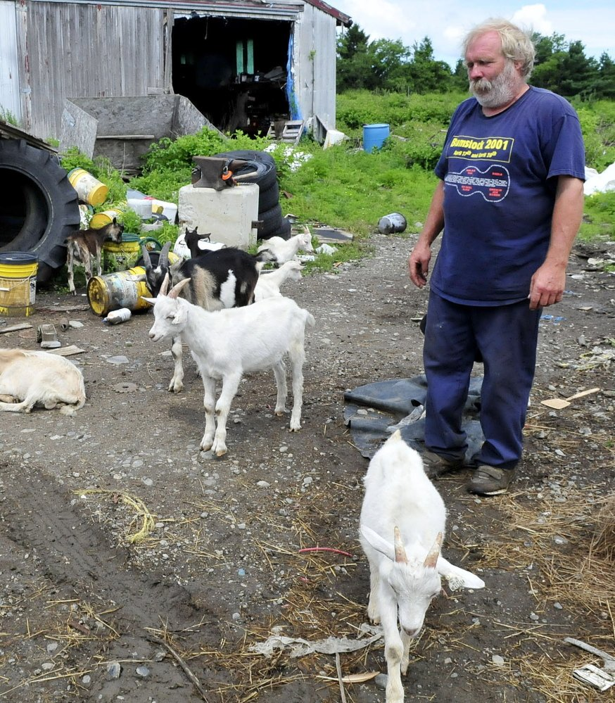 Farmer Mark Gould and his goats congregate in the yard of his farm in Sidney on Thursday. The goats wandered off the property Wednesday night after two other excursions.