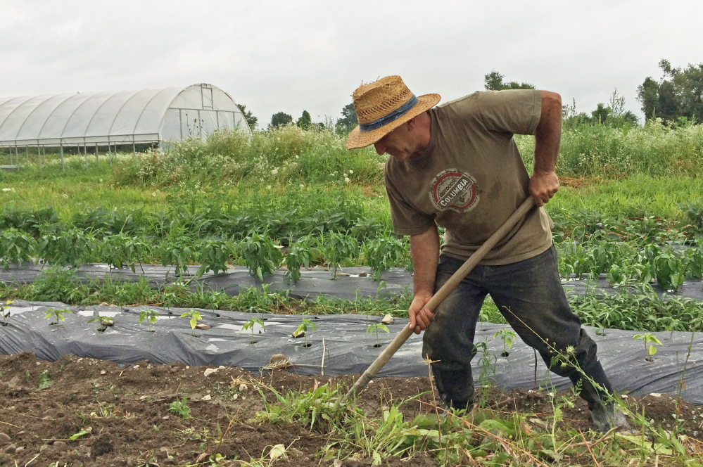 Surik Mehrabyan, a physicist from Armenia, spades soil to make a raised bed for growing potatoes on his quarter-acre plot at the Groundswell Center incubator farm in Ithaca, N.Y. The Associated Press