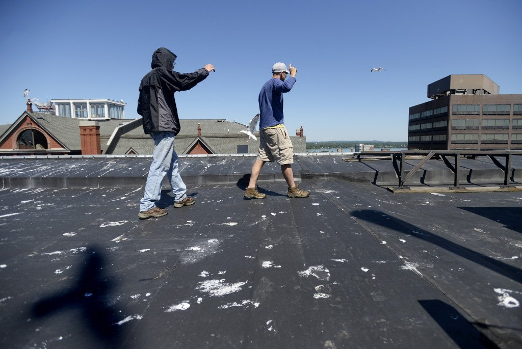 Dr. Noah Perlut, right, a UNE researcher, walks up to a seagull nest on the rooftop of MECA along with UNE student Chris Watt as they study the habits of urban seagulls in Portland Friday, June 27, 2014.   Shawn Patrick Ouellette/Staff Photographer