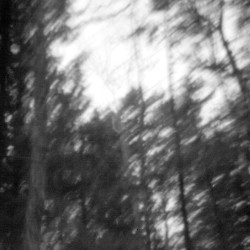 A stand of trees is captured by a pinhole camera at Indian Township in eastern Maine. A 1794 treaty with Massachusetts deeded thousands of acres to the Passamaquoddy people. This treaty would serve as the foundation of the land claims case Don Gellers was building. Gabe Souza/Staff Photographer