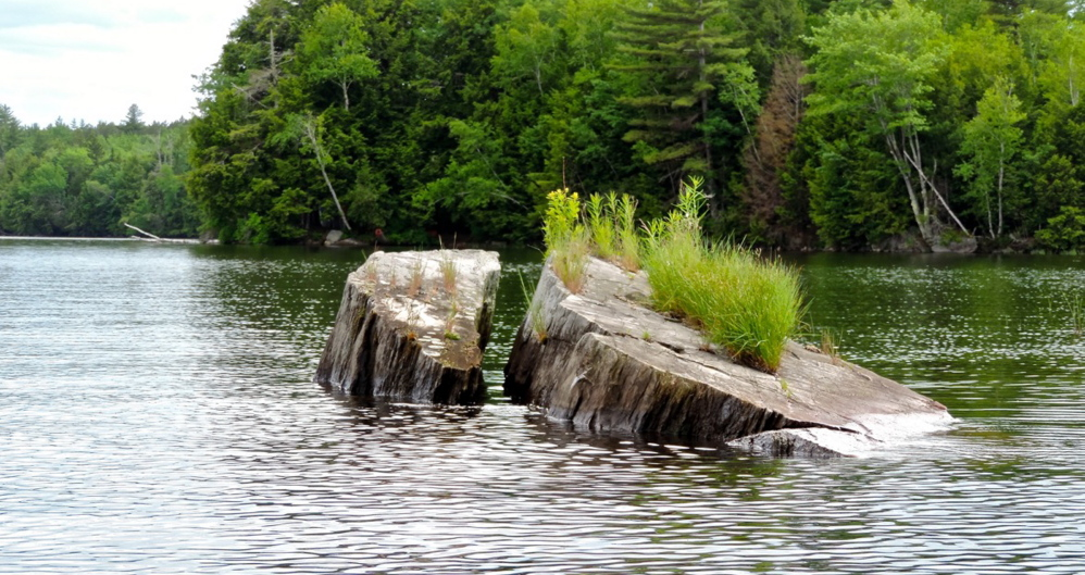 Gray, weathered stumps stick out from the shallows of Wesserunsett Lake, each adorned with unique toupees of vegetation: grasses, tiny birch, asters and more.