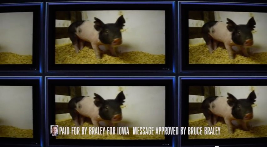 This frame grab image from video shows a portion of a campaign ad for Iowa Democratic Senate candidate, Rep. Bruce Braley, D-Iowa. It's a jungle out there in political television advertising, what with parrots, chicks, dogs and pigs taking turns in commercials that bite and scratch in a way no nonpartisan pet ever would.