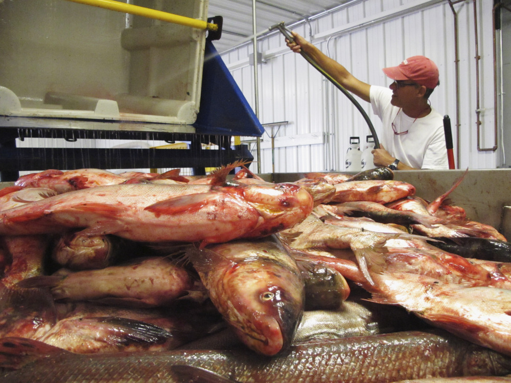 Peter Allen, manager at the American Heartland Fish Products processing plant near Grafton, Ill., flushes out a bin after dumping Asian carp onto a conveyor belt last month. The business, which converts the nuisance fish into animal feed and fish oil, joins a growing number of U.S. ventures that are profiting from the invasive species.