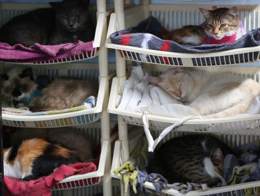 Sick cats rest in the hospice for felines suffering from leukemia at the home of Maria Torero in Lima, Peru. She estimates she spends about $1,785 a month to care for them.