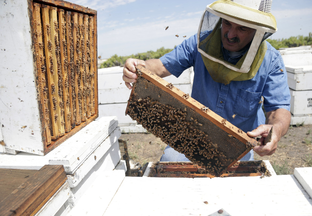 Gene Brandi inspects one of his beehives in Los Banos, Calif. A three-year drought has left hillsides barren and forced farmers to tear out orchards and leave fields fallow.