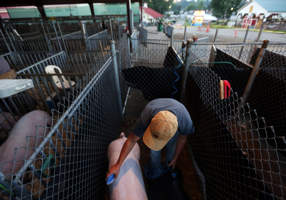Tristan Morgan, 15, washes a Yorkshire pig before the purebred swine competition at the West Virginia State Fair. In the days of small-scale agriculture, the most skilled kid could win. These days, those with disposable income have an edge.