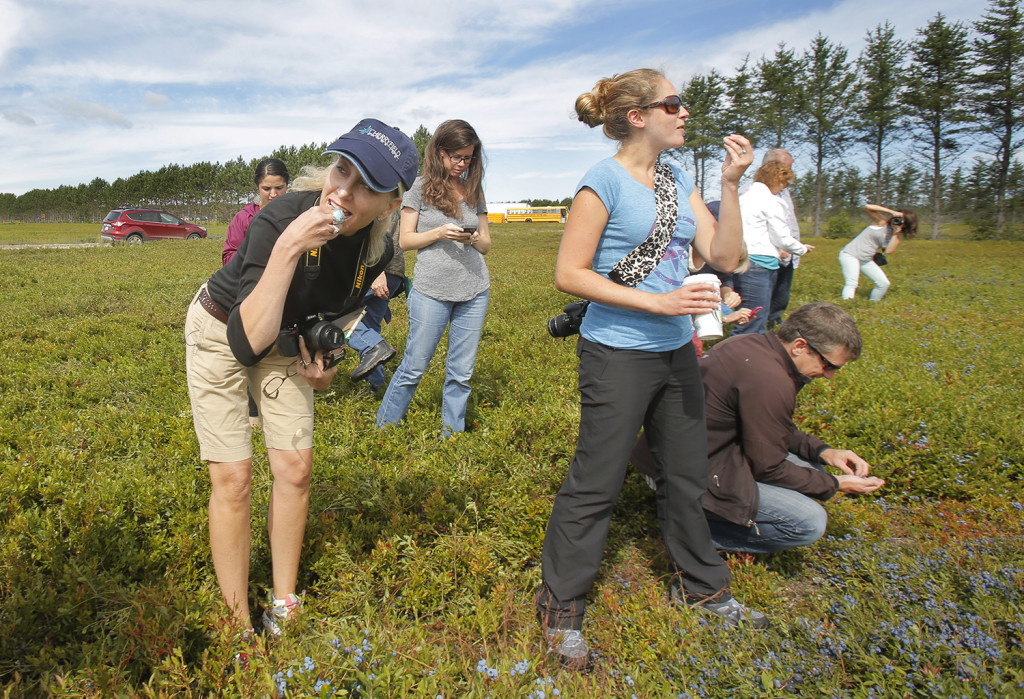 Susan Irby, left, and Anne Mauney taste blueberries while visiting a blueberry barren near Cherryfield with other food bloggers. Mauney's blog is call Fannetastic Food.