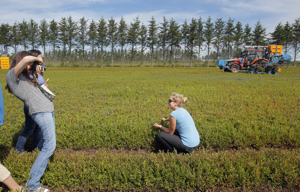 Gretchen Brown, left, takes a photo of Anne Mauney on the blueberry barrens near Cherryfield. The tractor in the background is harvesting blueberries.