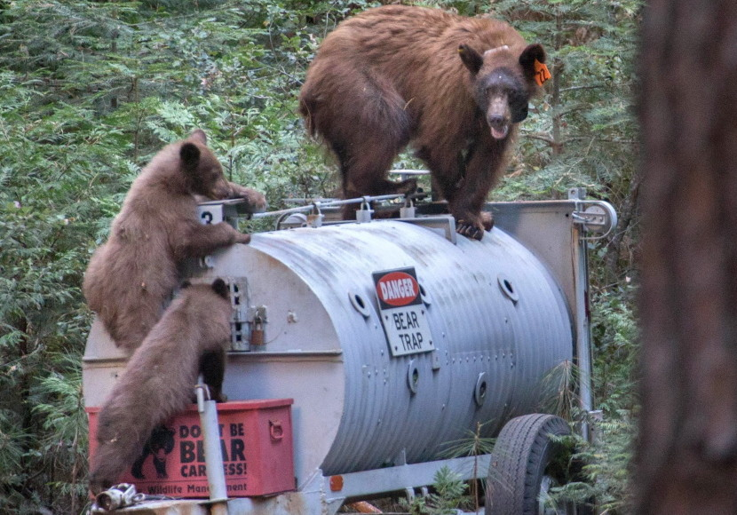 Happier Campers When Bears Behave Portland Press Herald